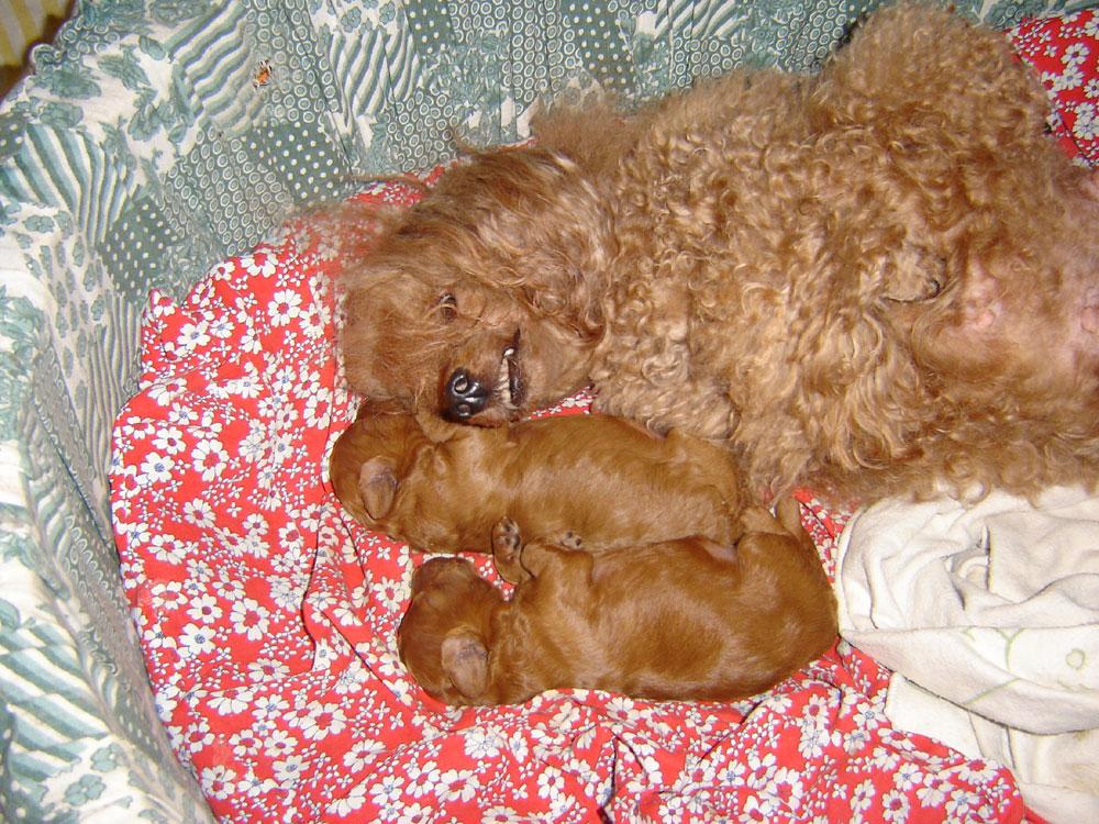 Mama mit Babies