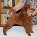 Feodora, 8 weeks (2)