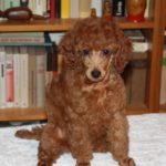 Feodora, 8 weeks (4)