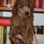 lila boy 5