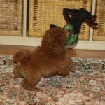 Hugo's Kampf mit 'ner Spinne