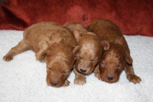 I- puppies (2)